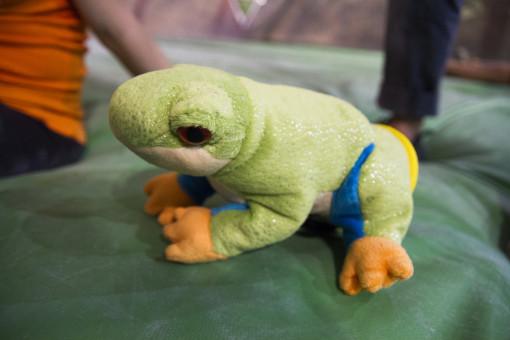 Unimpressed Frog_CU